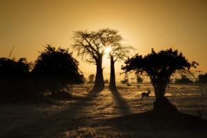 Luxury African Safari views